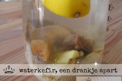waterkefir, een drankje apart